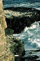 Cape St Mary