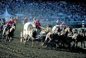 Chuckwagon Race, Calgary Stampede