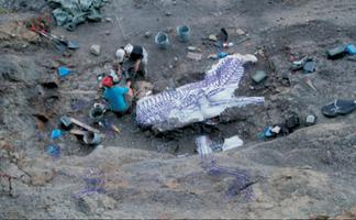Dinosaur Bone