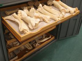 Bone Samples