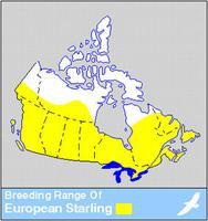 Starling Distribution