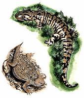 Lézard et Salamandre