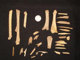 Bone sample