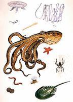 Invertebrates of Canada