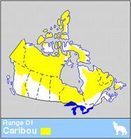 Caribou Distribution