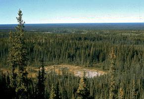 Forêt boréale et marais