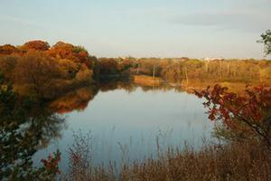Fall in the Humber Marshes