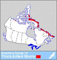 Thick-billed Murre Distribution