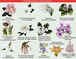 Provincial Floral Emblems