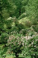 Vallon des lilas