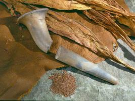 Droulers-Tsiionhiakwatha Site