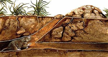 Habitat (septentrional) des gaufres