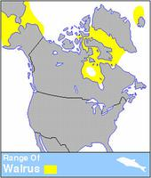 Walrus Distribution