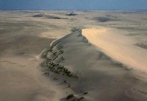 Dunes de sables (Athabasca)