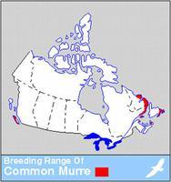 Common Murre Distribution