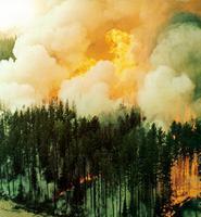 Forêt, feu de