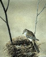 Flycatcher, Alder