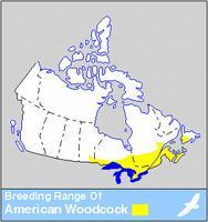 Woodcock Distribution