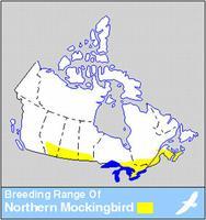 Northern Mockingbird Distribution