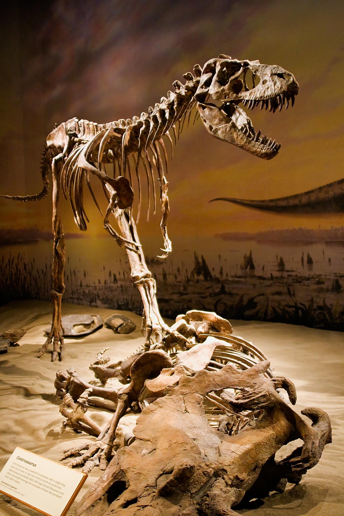 Albertosaurus Skeleton
