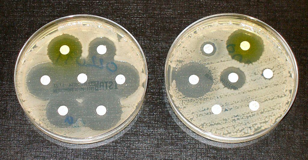 Tests de résistance aux antibiotiques