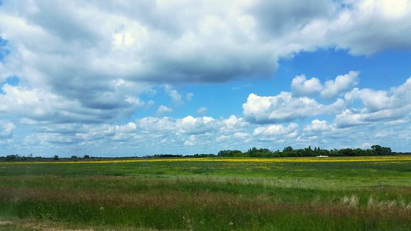 Prairies albertaines