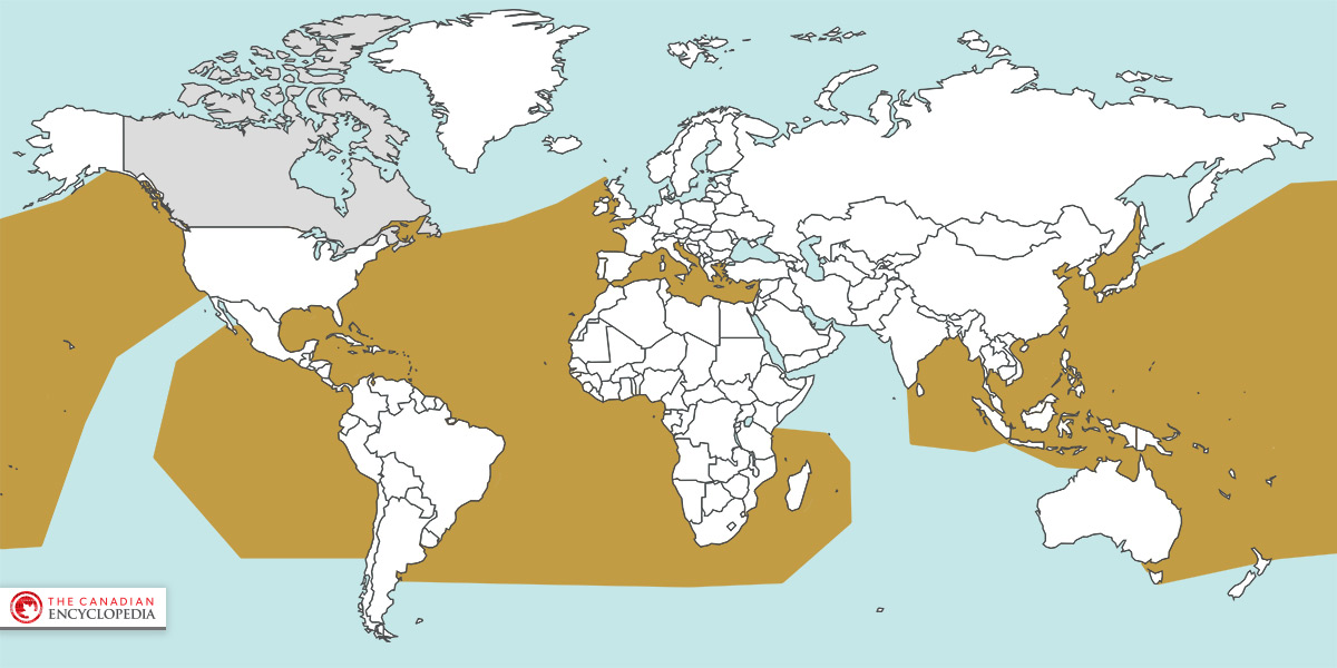 Range of the Leatherback Sea Turtle (Dermochelys coriacea)