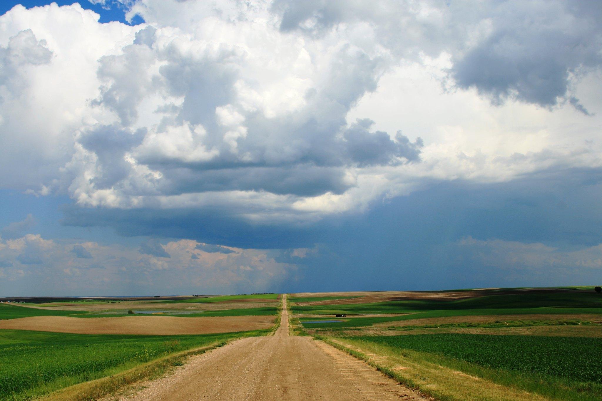 Road through Saskatchewan wheat fields