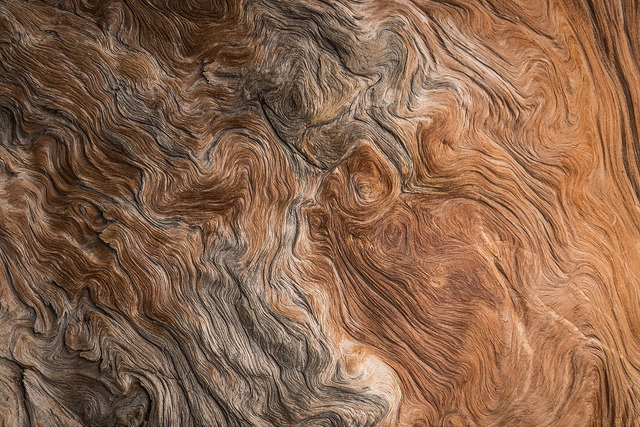 Photographie du bois du pin à fil entrelacé