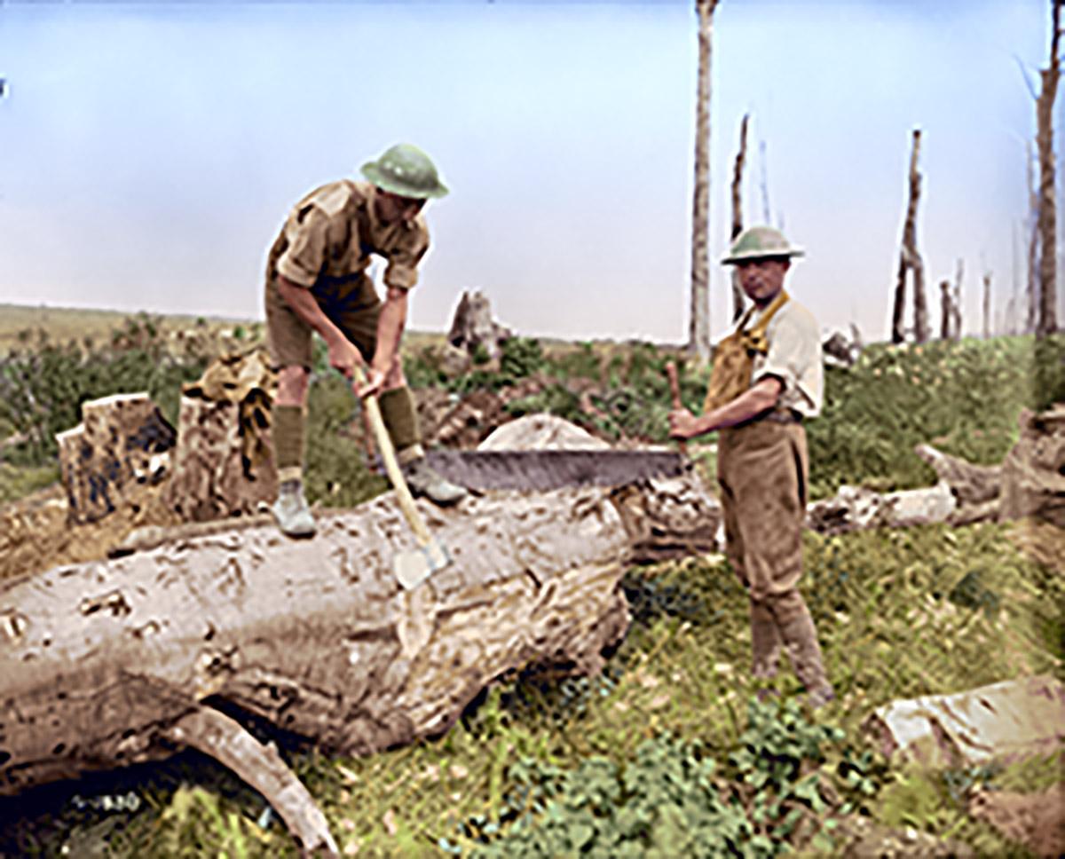 Les pionniers canadiens au travail dans un bois près de la crête de Vimy, août 1917.